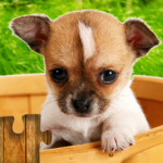 Dogs Jigsaw Puzzles Game (MOD, Unlimited Money) 28.5