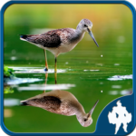 Reflection Jigsaw Puzzles MOD Unlimited Money 1.9.17